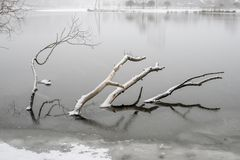Submerged tree by winter Stock Photo