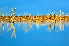 Submerged Trees Royalty Free Stock Images