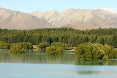 Submerged trees at Lake Tekapo Stock Photo