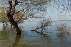 Submerged trees Stock Image