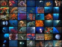 Submerged world royalty free stock images
