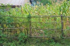 Subsistence farm plot barracaded by wattled sticks stock photography