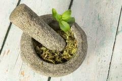 Substituto secado do açúcar do stevia Fotografia de Stock