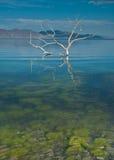 Subsurface weg aan boom Stock Foto's