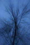 Subtelni lekcy promienie przez zmroku - błękitna mgła, drzewo z nagim branche Obrazy Royalty Free
