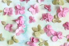 Subtelny artystyczny kwiecisty backgrodund z hortensia kwiatami zdjęcia stock