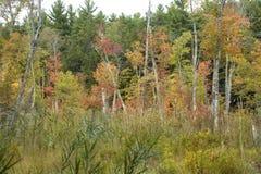 Subtelny jesień kolor w bagnie przy Bigelow wydrążeniem obraz stock