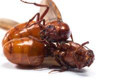 The subterranean ants Stock Photos