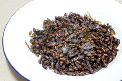 Subterranean ants, local cuisine of Thai, Northern style food, Lanna style food In The north of Thailand. Royalty Free Stock Photos
