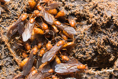 The subterranean ants Stock Image
