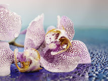 Subtiele bloemblaadjes Royalty-vrije Stock Foto's
