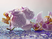 Subtiele bloemblaadjes Stock Foto's