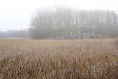 Subtiele kleuren van moerasgrassen in recente de herfstmist Royalty-vrije Stock Fotografie