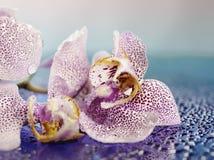 Subtile Blumenblätter Lizenzfreie Stockfotos