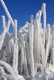 Subtilis-Schnee Stockbilder