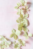 Subtle artistic floral backgrodund with hortensia flowers Royalty Free Stock Photography