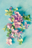 Subtle artistic floral backgrodund with hortensia flowers stock image