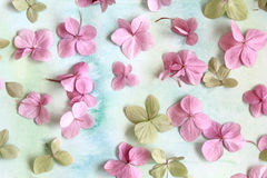 Subtle artistic floral backgrodund with hortensia flowers Stock Photos