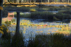 Subtle colors in bog water, Plymouth, New Hampshire. Stock Image