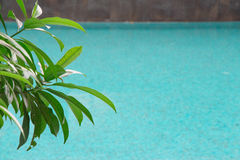 Subtle pool reflections with nice marbel brick work and bright g Royalty Free Stock Images