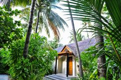 Subtropical coastal plants and buildings royalty free stock photography
