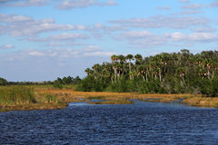 Subtropical Everglades Landcape royalty free stock photo