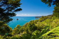 Subtropical forest of Abel Tasman NP, New Zealand royalty free stock images