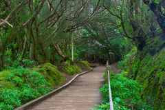 Subtropical forest in Tenerife, Canary Islands, Spain. Subtropical forest in Tenerife, Spain Stock Photography
