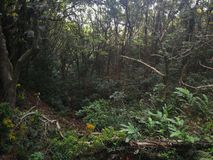 subtropical  forest view from the up side of the mountain stock photo