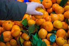 subtropical frukt arkivfoto