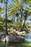 Subtropical garden Royalty Free Stock Photo