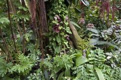 Subtropical garden Stock Photo