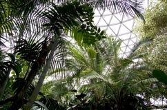 Subtropical garden Stock Image
