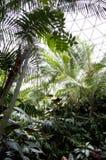 Subtropical garden Royalty Free Stock Photos