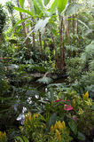 Subtropical garden plants Stock Photography