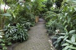 Subtropical garden plants Stock Photo