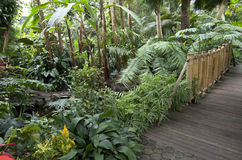 Subtropical garden plants Royalty Free Stock Images