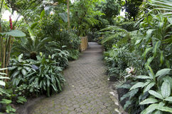 Subtropical garden plants Stock Photo