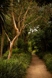 Subtropical Gardens of Abbotsbury Stock Photography