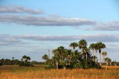 Subtropical Landcape Stock Photo