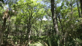 Subtropical maritime forest. Panning view of subtropical maritime forest in south carolina stock video footage