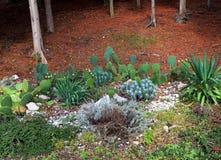 Subtropical plants Stock Image