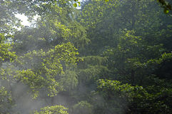 subtropical rainforest Royaltyfria Bilder
