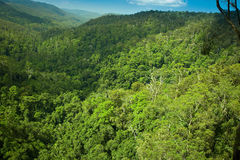 Subtropical rainforrest in Springbrook national park Royalty Free Stock Image