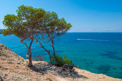 Subtropical vegetation growing at the coast of Mallorca Stock Image
