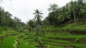 Subtropisch bos in Bali Stock Fotografie