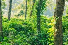 Subtropisch dicht bos van Nepal, Dichte Wildernisachtergrond stock foto