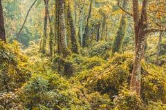 Subtropisch dicht bos van Nepal, Dichte Wildernisachtergrond stock fotografie
