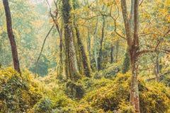 Subtropisch dicht bos van Nepal, Dichte Wildernisachtergrond stock afbeelding