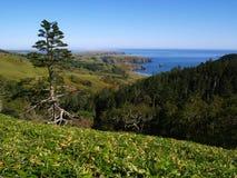 Subtropisch eiland Royalty-vrije Stock Afbeeldingen